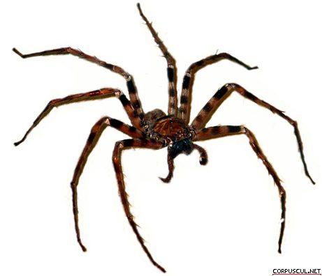Mekong-Spider-2
