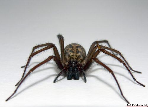 s_spider